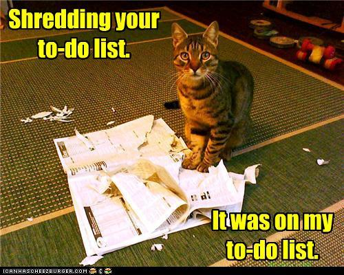 funny-pictures-shredding-your-to-do-list1
