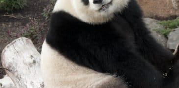 Lasst euch von Google keinen (Panda)Bären aufbinden!