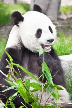 Der Panda hat gut lachen :-)
