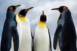 Großes Update: Penguin