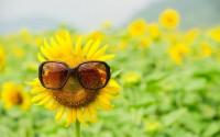 Ich wünsche Euch einen schönen, warmen Frühlingstag!