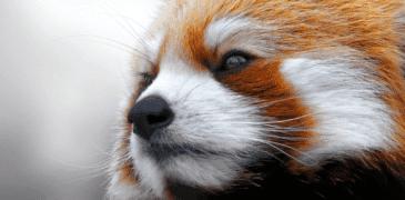 Panda 4.0 released
