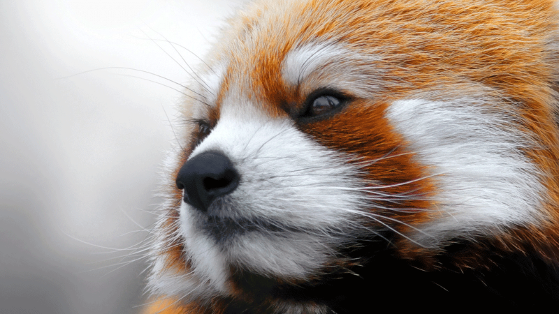 neues-panda-update