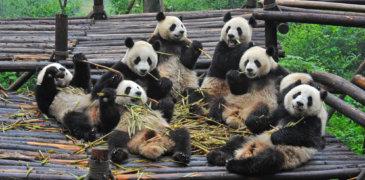 Große SEO Umfrage zum Panda Update