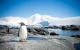 pinguin-arktis