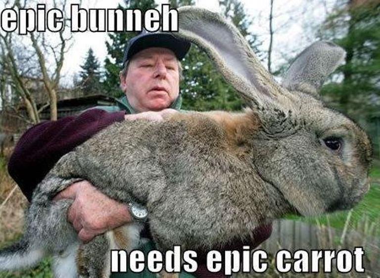 epic bunny