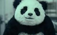 panda beitragsbild