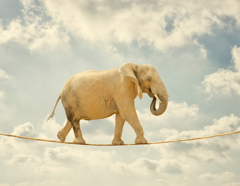 Elephant Walking On Rope, Outdoor