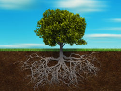 Querschnitt eines Baums