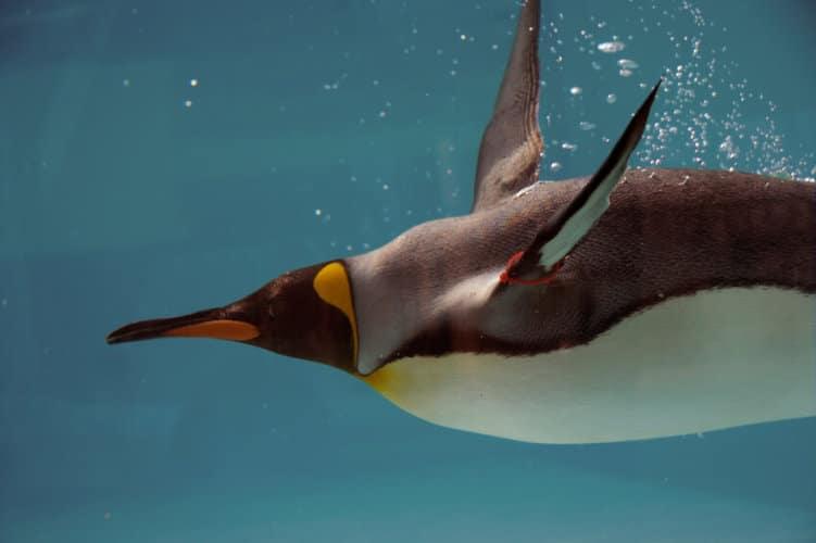 Google Penguin 4 wurde released