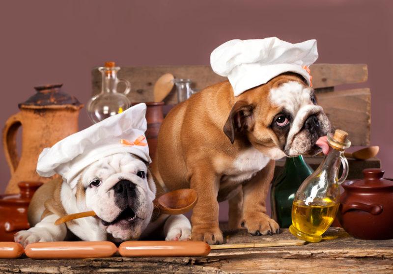 bulldoggen beim schlemmen