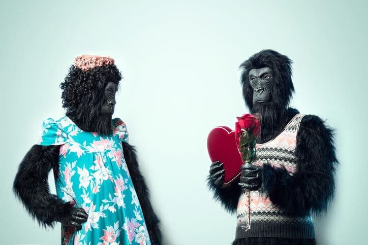 Mister Gorilla verteilt nur Valentinstagsgeschenke, wenn der Inhalt eures Webtexts super ist.