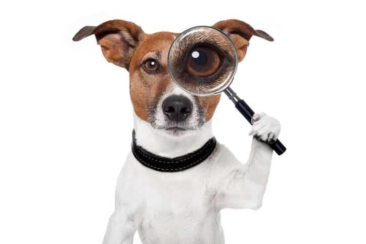 hund mit lupe auf bloggersuche