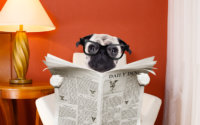 Hund beim Zeitung lesen - Überschriften