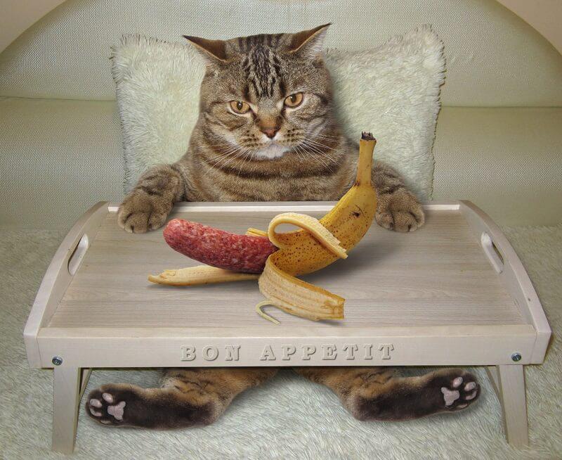 unzufriedene katze mit wurst in der bananenschale