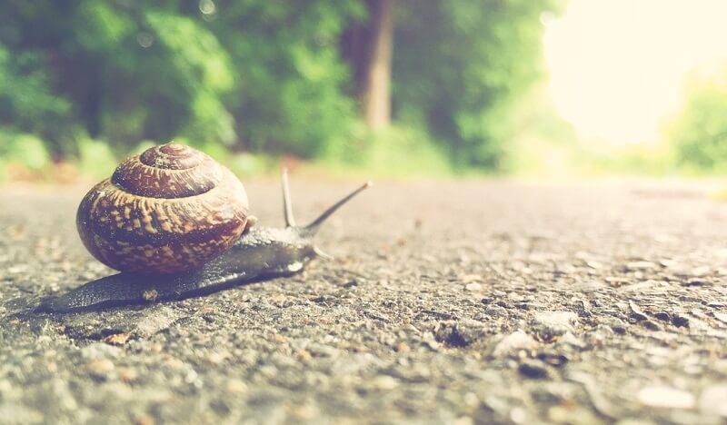 Schnecke kriecht auf einer Straße