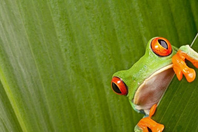 11 Anwender-Tipps zum Screaming Frog aus der SEO-Praxis