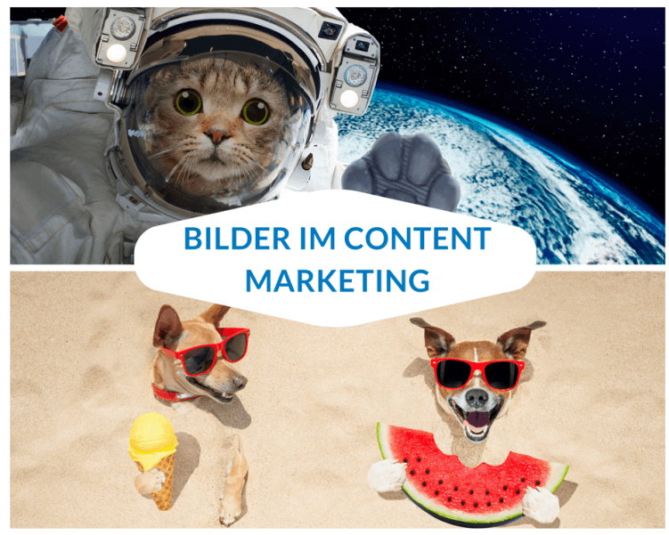 bilder-im-content-marketing-hund-katze