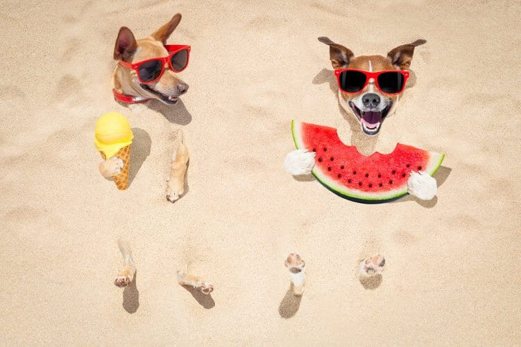 hunde-im-sand-am-strand