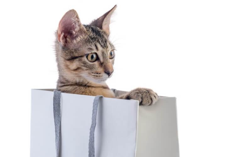 Katze schaut aus einer Tüte