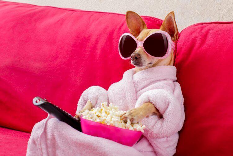 Hund auf der Couch mit Popcorn