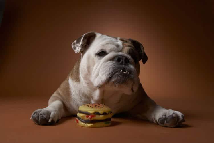 Hund mit Burger-Spielzeug aus Plastik