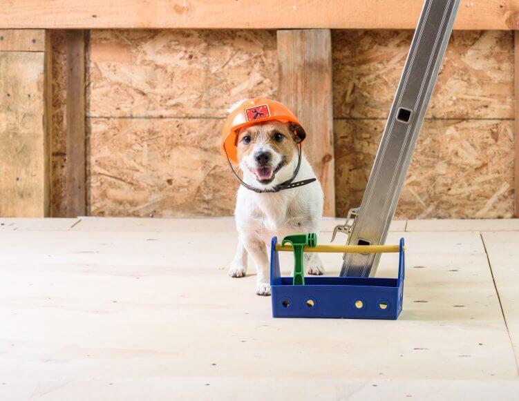 hund mit werkzeugkasten_tools