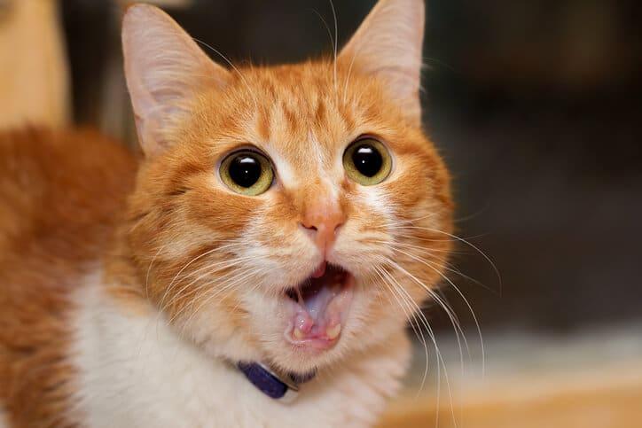 Katze geschockt - neue Domain