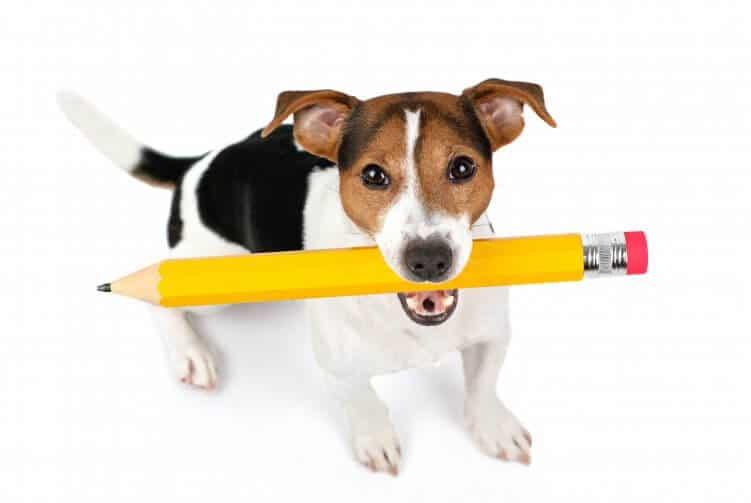 Terrier mit Stift im Maul_CM-Artikel erstellen