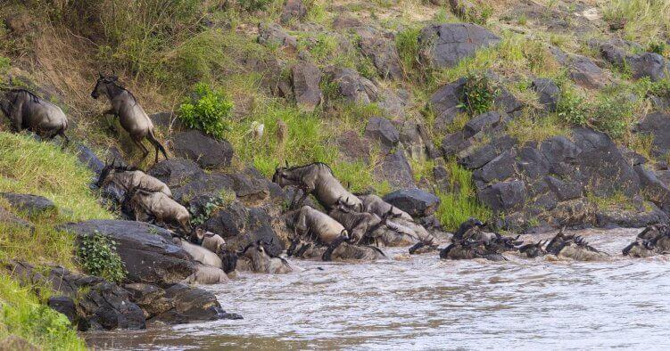 SEO Domainumzug - auf zu neuen Ufern