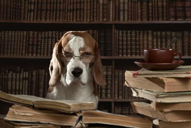 Hund mit Brille vor Bücherstapel