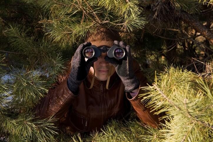 Spion mit Fernglas im Nadelwald