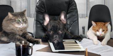 Employer Branding: Mach Deine Mitarbeiter zu Markenbotschaftern!