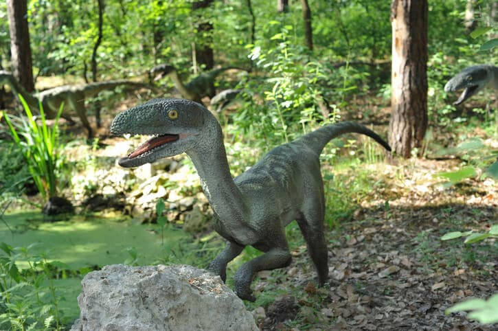 Velociraptor - Dinosaurier