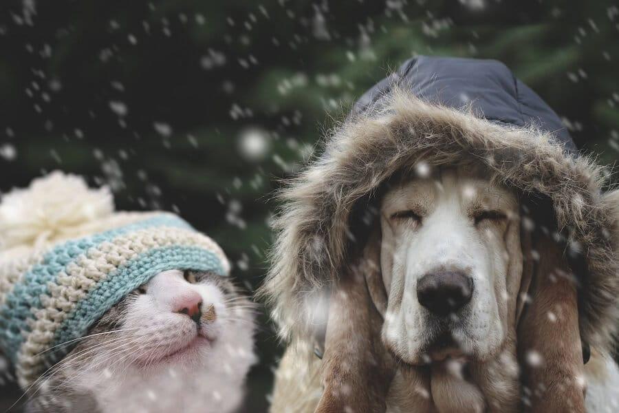 Hund und Katze als Symbol für glückliche Newsletter-Abonnenten