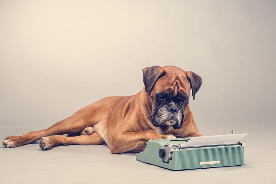 Hund schreibt Pillar Page
