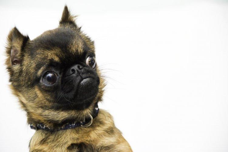 Hund erschrickt beim Anblick schlechter Links