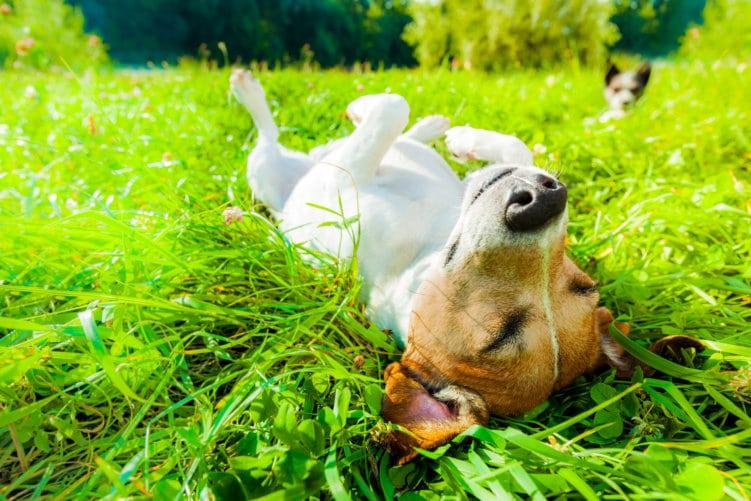 kundenzufriedenheit_hund entspannt