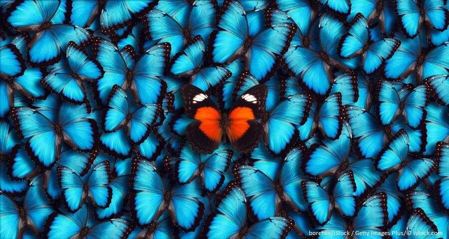Schmetterling mit Alleinstellungsmerkmal