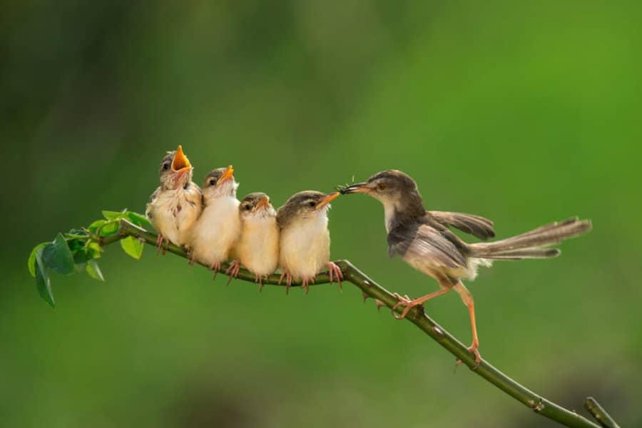 SEO-Strategie: Vögel auf Ast