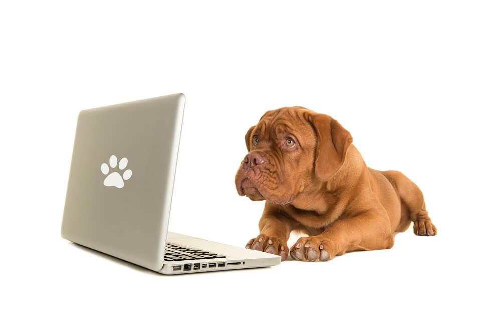 Hund schaut Shoppable Content am Laptop an
