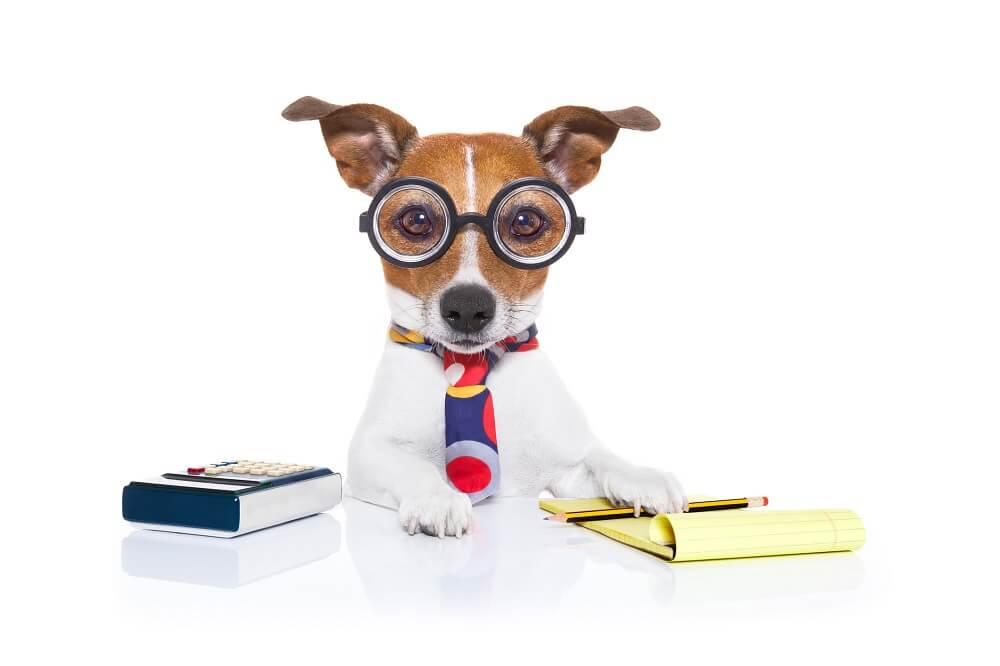 Hund erklärt Shoppable Content