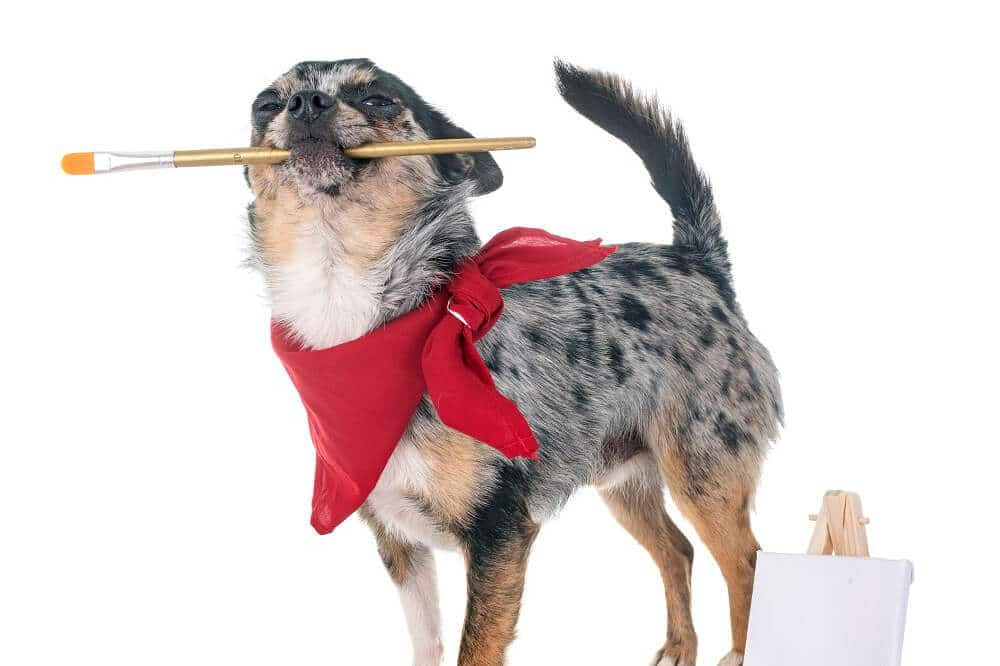 Hund kreiert Shoppable Content