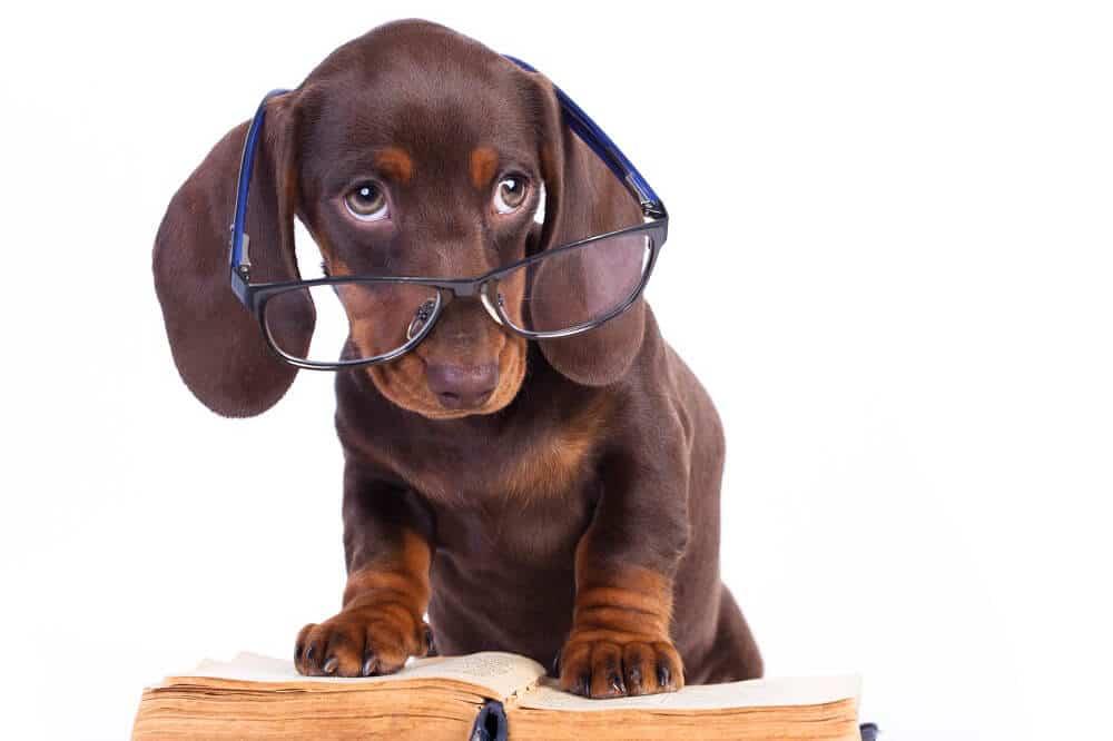 Hund erforscht Herkunft von Shoppable Content in Büchern