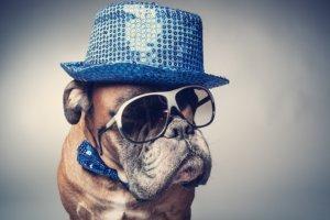 Verkleideter Hund für Marketing-Kampagne